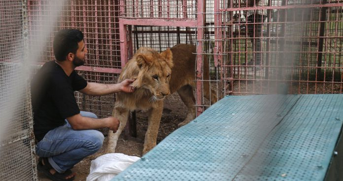 Gaza Zoo Evacuates Neglected Animals