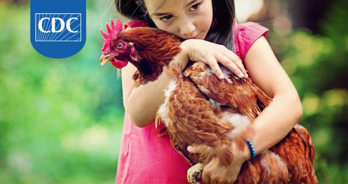 CDC Warns Not To Kiss Chickens