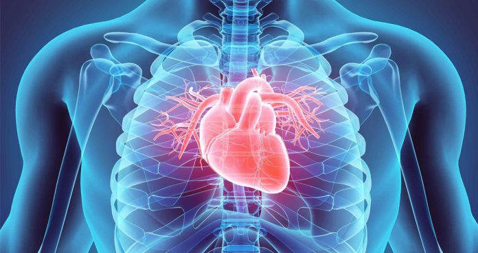 Glucosamine-Supplements-May-Reduce-Risk-of-Cardiovascular-Disease
