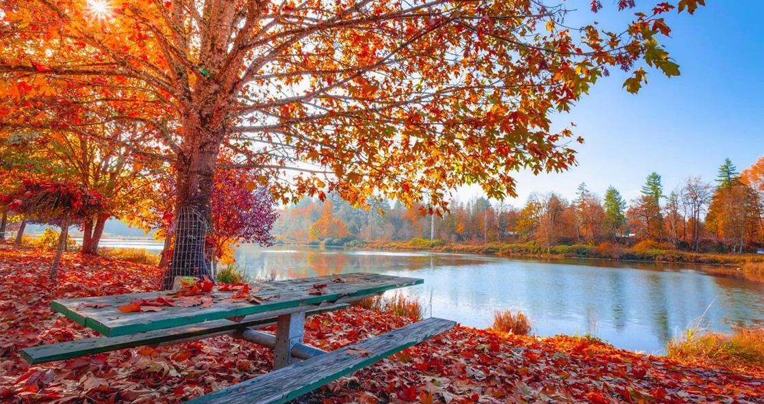 autumn season - photo #31