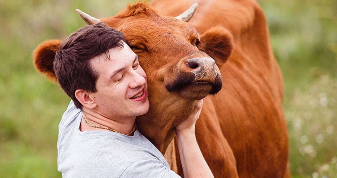 Why-'Cow-Hugging'-Is-Becoming-A-New-Wellness-Trend