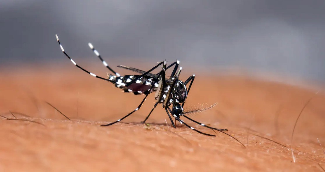 More-Than-8-Billion-Could-Be-At-Risk-of-Malaria-and-Dengue-by-2100,-Finds-Study